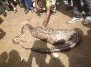 snakeg2